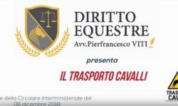 articolo_trasporto_cavalli